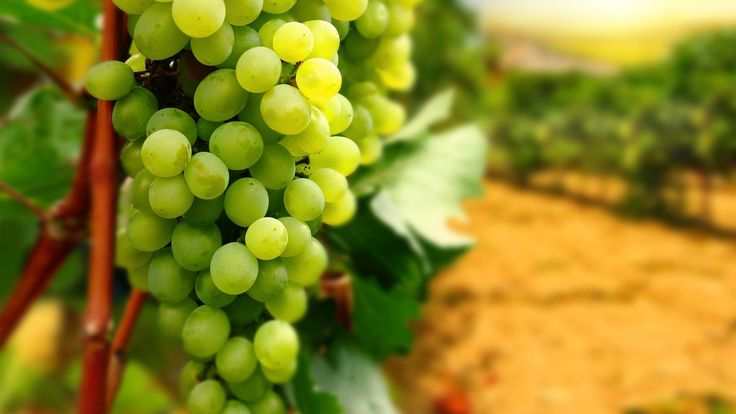 Grapes Unboxing  #grape #grapes #unboxing #wine #greengrapes #winegrape