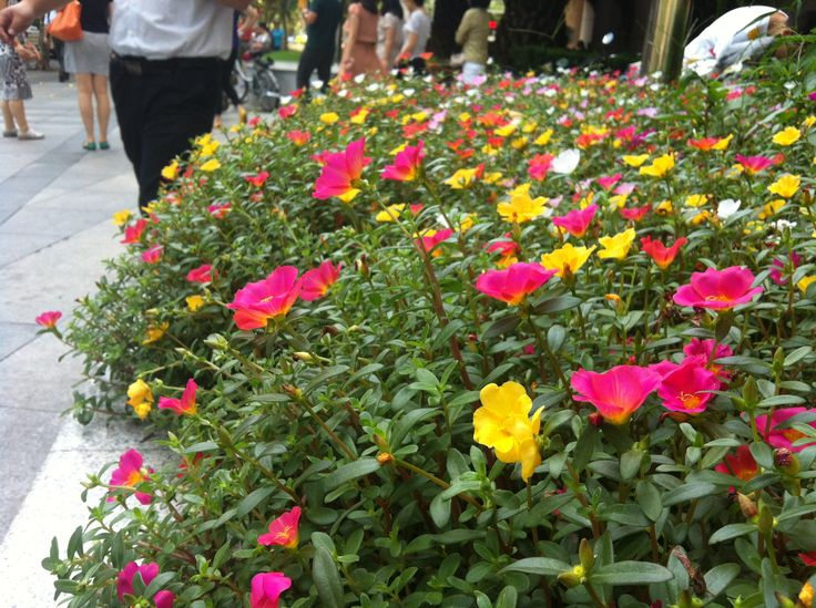 flowers in shanghai