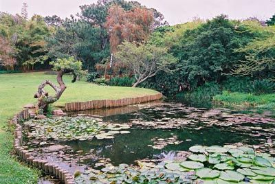 The lush Japanese Gardens, in Durban, South Africa