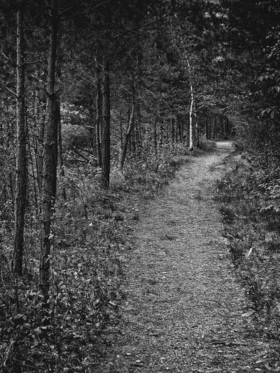 bwstock.photography - photo   free download black and white photos  //  #forest #path