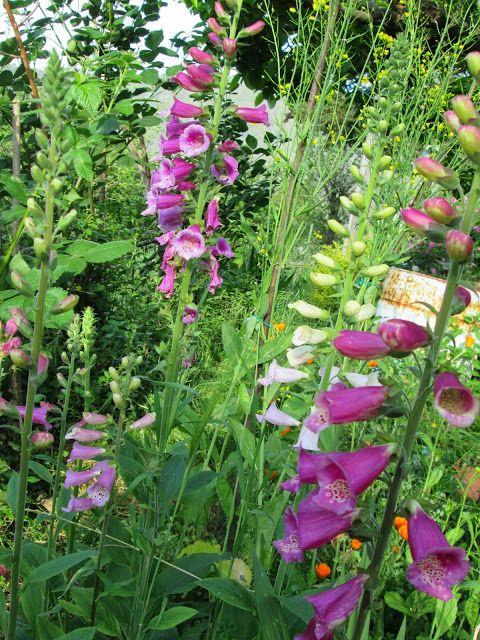 Raccontare un paese: fiori selvatici dal giardino spontaneo