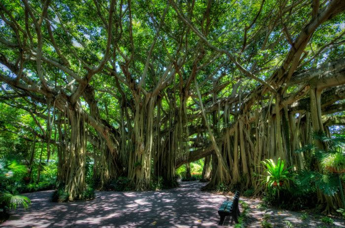 17 Fascinating Spots In Florida That Are Straight Out Of A Fairy Tale: 3. These banyan trees in Winter Haven surely become an enchanted forest at night.