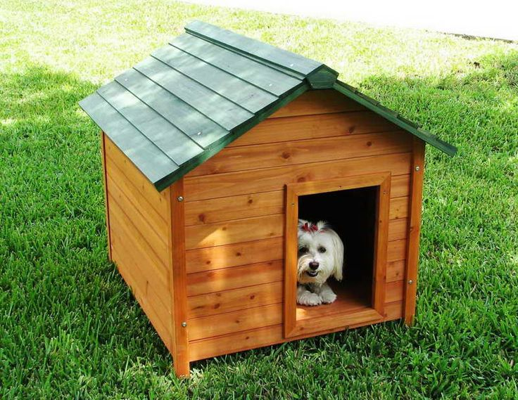 Indoor Dog Houses Luxury With Green Roofs