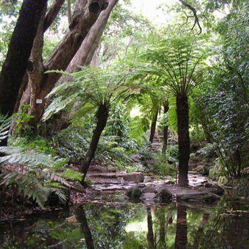 la route des jardins, véritable 'riviera' tropicale en afrique du sud
