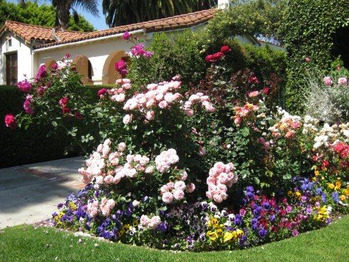 The long blooming roses in the bed are 'Just Joey' in full bloom, with 'Brass Band' roses and white 'Iceberg' roses planted in a rounded bed bordered by grass.    The bed is edged with a great variety of colorful Pansies. Plantings of annuals are very inexpensive ideas to finish off a flower bed.