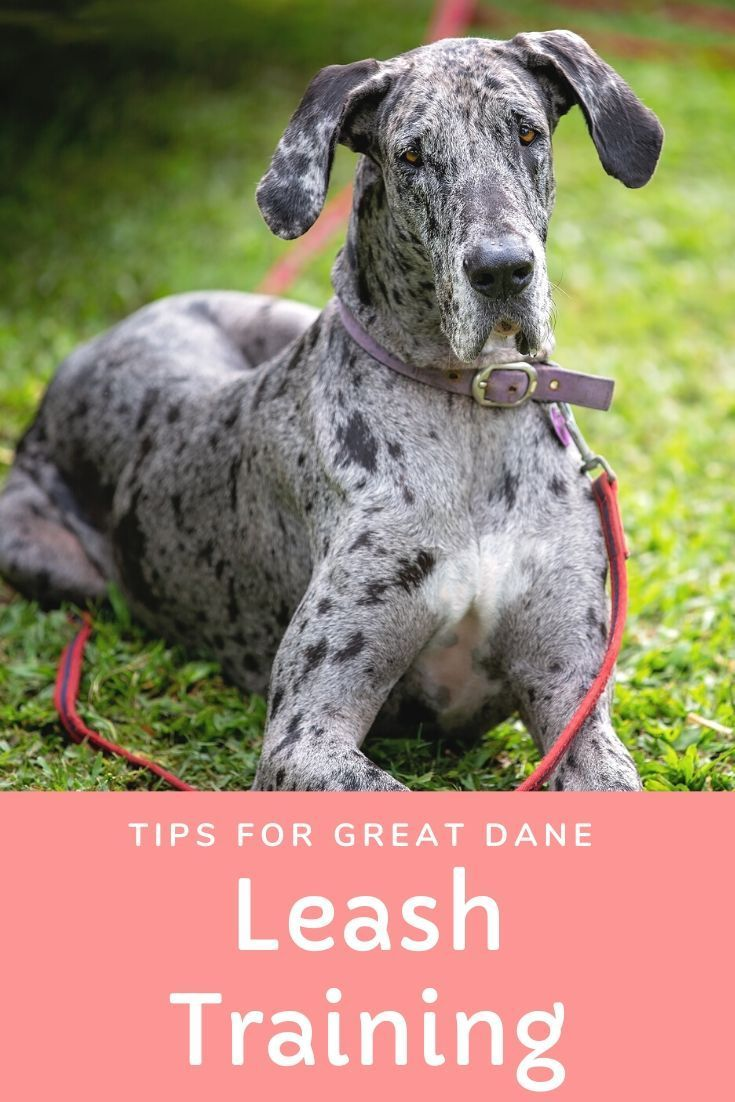 Follow These Straightforward Instructions For Leash Training Your