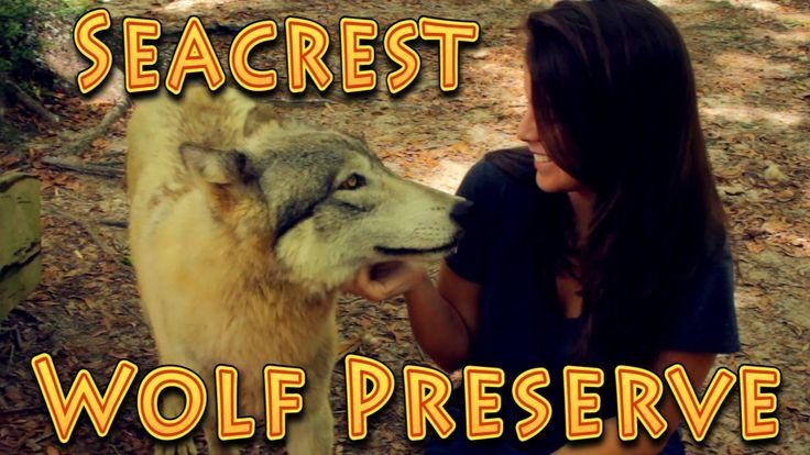 Travel: Seacrest Wolf Preserve, Chipley, Florida!!! (04.16.2016)