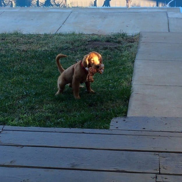 The 100 Most Important Puppy Photos Of All Time – 59. The Thoughtful Buddy; This lil' guy brings his stuffed toy out to pee every morning, just in case his buddy needs to go to the bathroom, too. http://www.pindoggy.com/pin/the-100-most-important-puppy-photos-of-all-time-59-the-thoughtful-buddy-this-lil-guy-brings-his-stuffed-toy-out-to-pee-every-morning-just-in-case-his-buddy-needs-to-go-to-the-bathroom-too/
