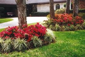 dwarf azaleas for containers - Google Search