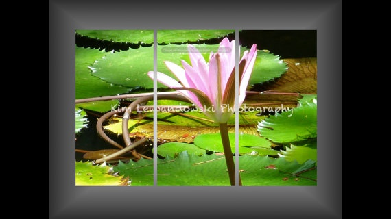water lily triptych