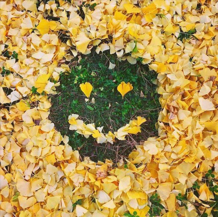 _arte-foglie-cadute__004