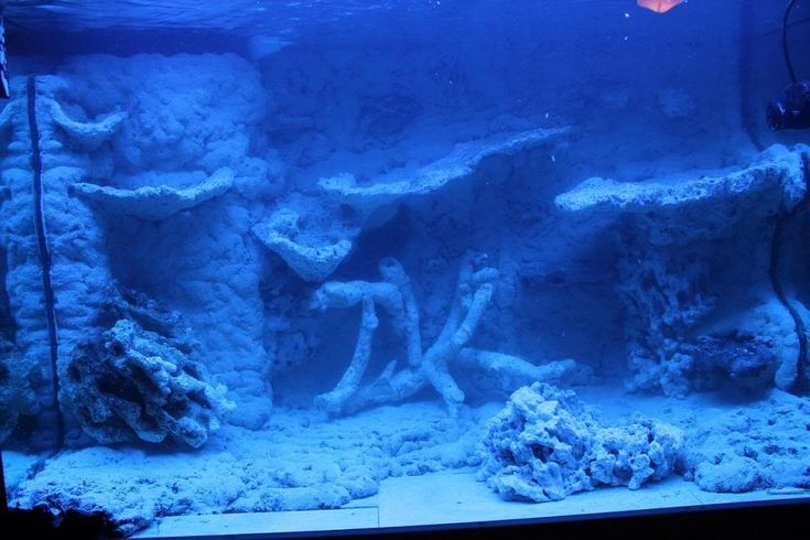 Tips and Tricks on Creating Amazing Aquascapes - Reef Central Online Community