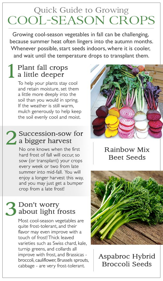Cool Season Crops To Plant Right Now Plus Tips On Having A Huge Harvest Later Vegetables Vegetable Seeds For Sale Vegetable Seed