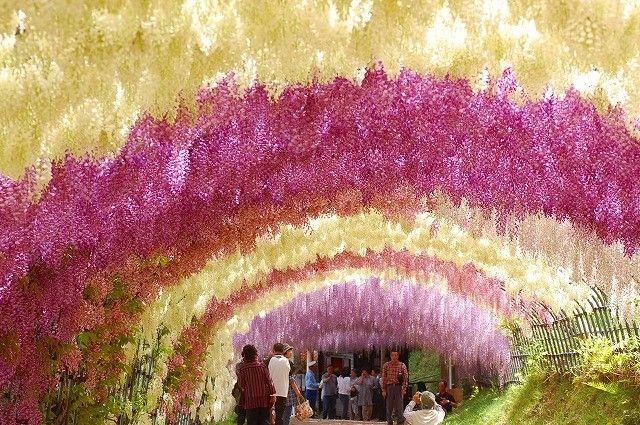 世界の絶景10!宣伝は一切ナシの「河内藤園」の藤棚が幻想的な美しさ | RETRIP