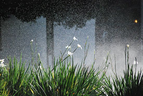 San Francisco sprinkler by flyingperonis
