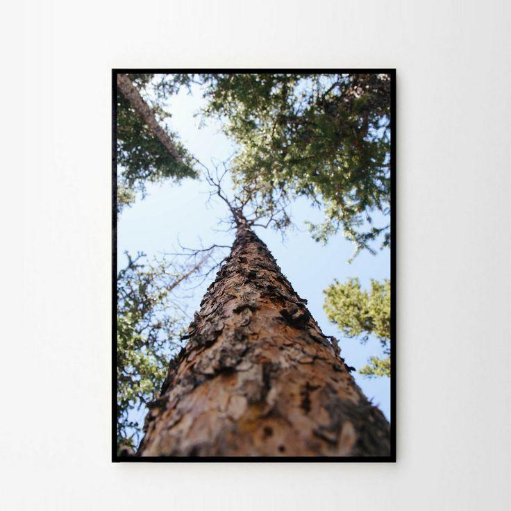 Foto plakat - Pod drzewem