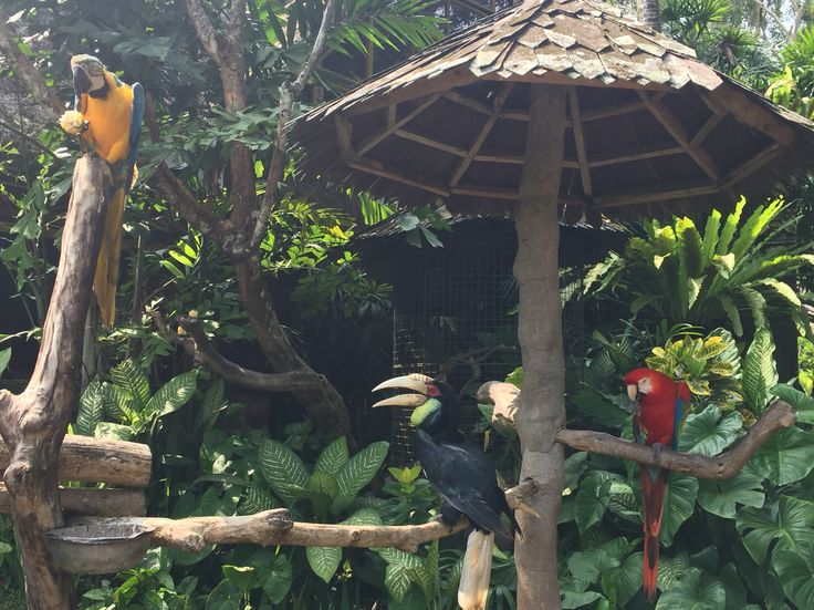 The birds #bali #blancomuseum #indonesia