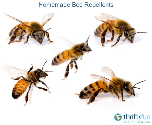 This is a guide about homemade bee repellents. Keeping bees away from your home and yard can be costly and involve using commercial sprays. You can save money and perhaps use less toxic products by making your own homemade bee repellents.