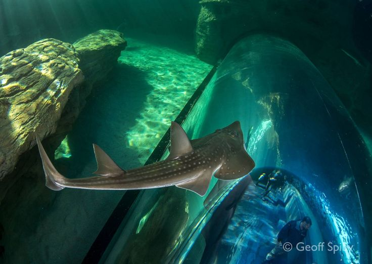 Two Oceans Aquarium Cape Town, South Africa | Exhibits | Conservation | Education | Events | Diving