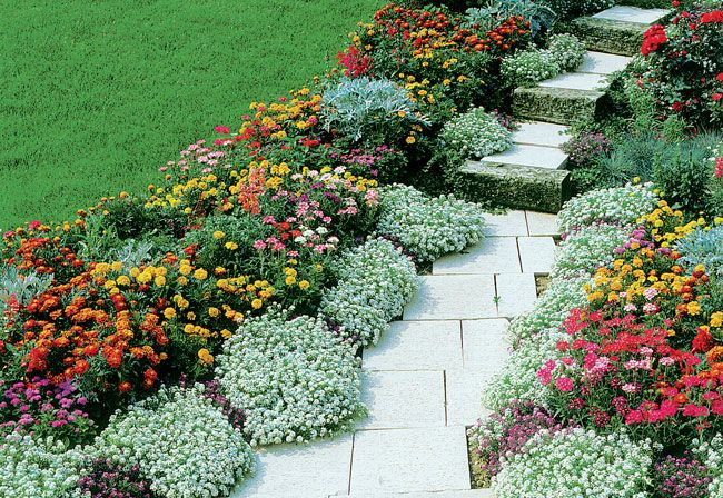 Oltre 25 fantastiche idee su piante perenni su pinterest - Piante basse perenni da giardino ...