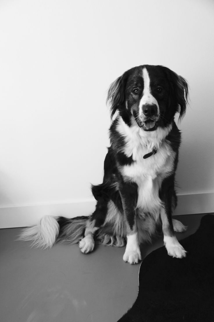 #koningbinc #dog #animal #homesweethome #dogmodel