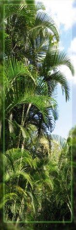 Palmy , Dżungla - plakat - 53x158 cm  Gdzie kupić? www.eplakaty.pl