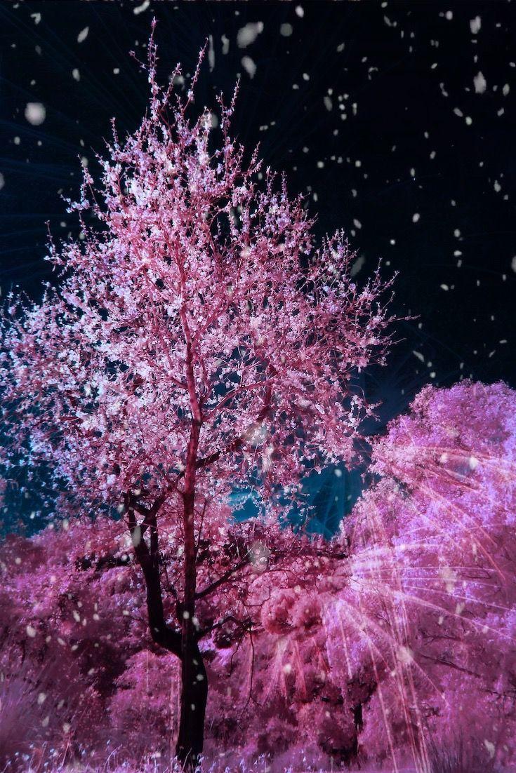 You Are Beautiful Cherry Blossom Tree Cherry Blossom Blossom Trees