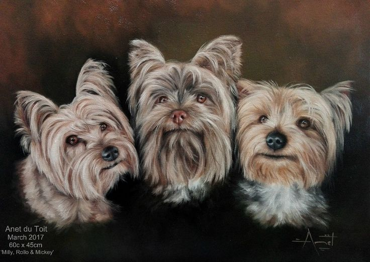 Commissioned yorkie portrait painting.