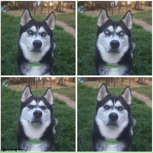 飼い主がボールを投げた…と思ったら投げるふりをしただけだったとわかってゴルゴ13みたいな目つきに...