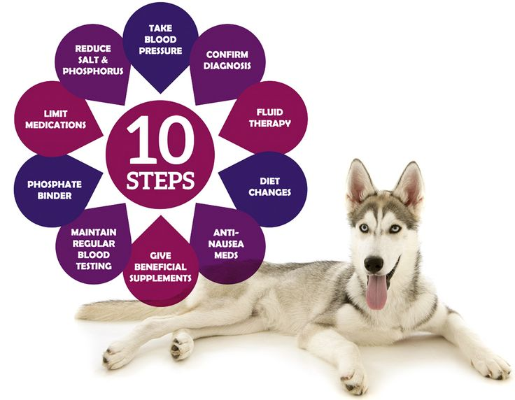 Best Renal Diet For Dogs