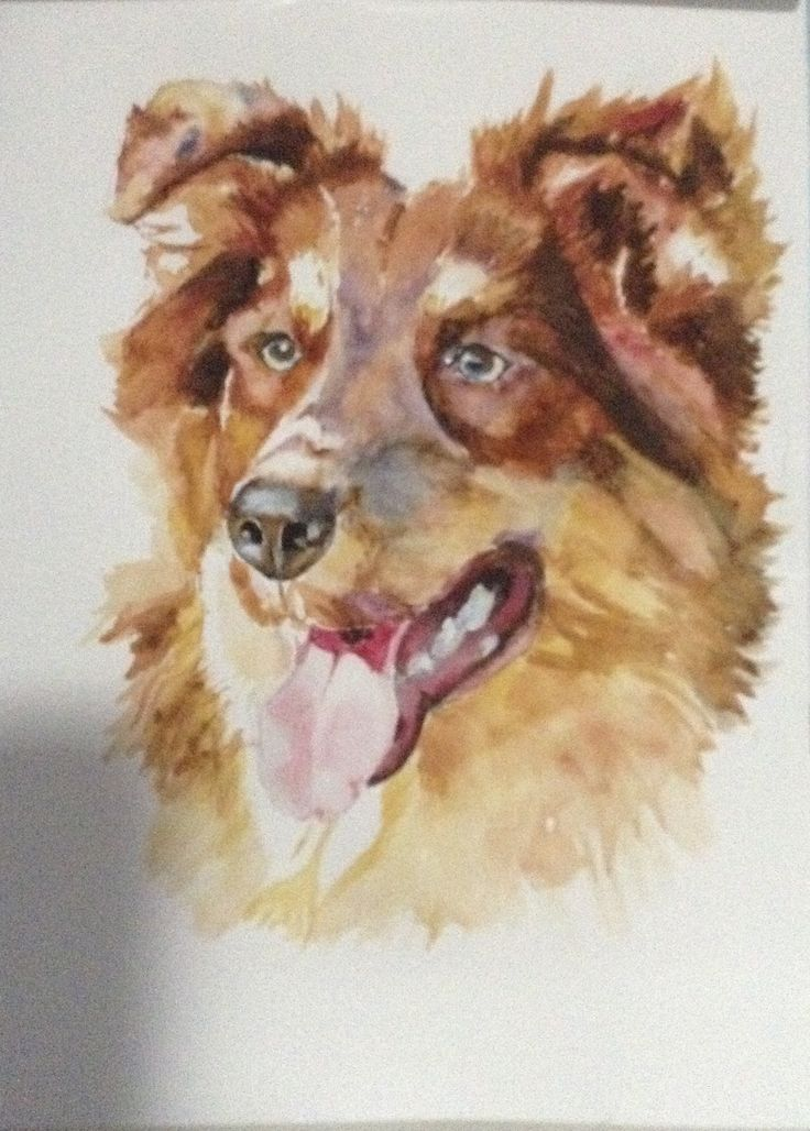 My watercolour painting of an Australian Shepherd. This painting is for sale.