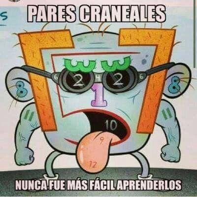 NOMBRE DE LOS 12 PARES CRANEALES  Nervio Olfativo (I)  Nervio Óptico (II)  Nervio Oculomotor / Motor Ocular Común (III)  Nervio Troclear / Patético (IV)  Nervio Trigémino (V)  Nervio Abductor / Abducens / Motor Ocular   Externo (VI)  Nervio Facial (VII)  Nervio Estatoacústico / Vestibulococlear / Auditivo (VIII)  Nervio Glosofaríngeo (IX)  Nervio Vago / Neumogástrico (X)  Nervio Accesorio (XI)  Nervio Hipogloso (XII)