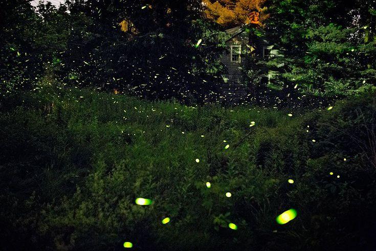 Fireflies of New York | Pete Mauney