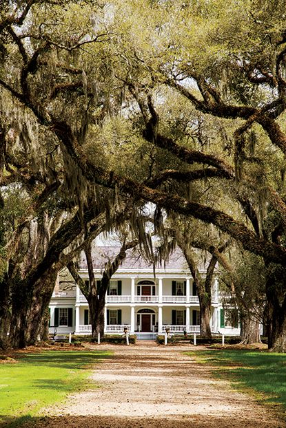 Photo Credit: Rien Fertel. <b>St. Francisville, LA:</b> The allee leading to Rosedown Plantation.                                                                                                                                                     More