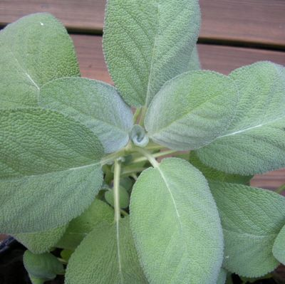 Voici 27 plantes qui possèdent d'importantes propriétés médicinales et que vous pouvez faire pousser chez vous : 1 – Aloe Vera L'aloe vera ne pousse que sous le soleil avec de la terre sèche ou humide bien drainée. Bien que la plante ait un goût fade, elle est comestible. La sève de l'aloe vera est extrêmement …