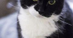 My fat derpy old kitty Meatball. via http://ift.tt/29KELz0