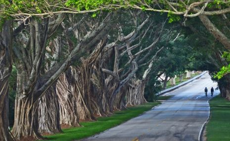 Jupiter Island — One of prettiest rides in South Florida is under the canopy of trees along Bridge Road on Jupiter Island.