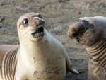 Comedy Wildlife Photography 2017 awards pictures are funnier than ever