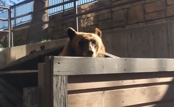 Colorado Man Calmly Tells a Bear To Get Out of His Garbage Dumpster