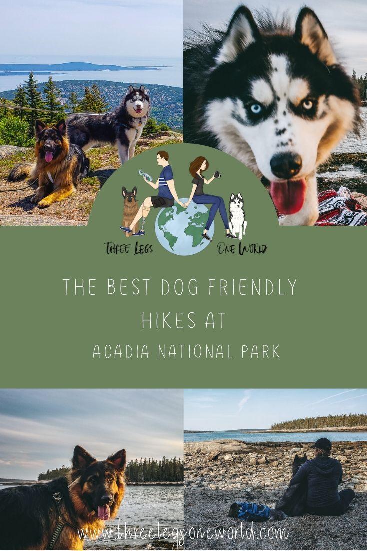5 Can T Miss Dog Friendly Hikes At Acadia National Park In 2020 Dog Friendly Trails National Parks Acadia National Park