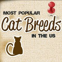 function selectme { 	document.getElementById'embedcode'.select; }               Copy the code below to share our Most Popular Cat Breeds Infographic:       <a href=`http://entirelypets.com/most-popular-cat-breeds.html`><img src=`http://pets13.com/image_files/most-popular-cat-breeds/main.jpg` title=`The Most Popular Cat Breeds in the US` /></a>