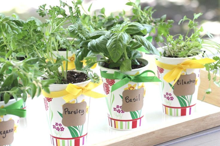 Herb Garden Designs,planting a small herb garden,small herb garden ideas,small herb garden plants