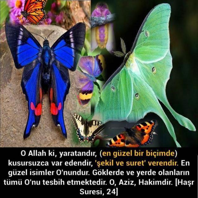 <p style=margin: 0px; font-size: 13px; line-height: normal; font-family: Verdana;>O Allah ki, yaratandır, (en güzel bir biçimde) kusursuzca var edendir, şekil ve suret verendir. En güzel isimler Onundur. Göklerde ve yerde olanların tümü Onu tesbih etmektedir. O, Aziz, Hakimdir.<span style=color: rgb(18, 20, 25); font-family: Trebuchet MS, Arial, Helvetica, sans-serif; background-color: rgb(255, 255, 255);>[Haşr Suresi, 24]</span></p>
