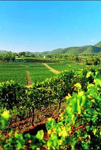 Love the Hunter Valley Wine Country in Australia!