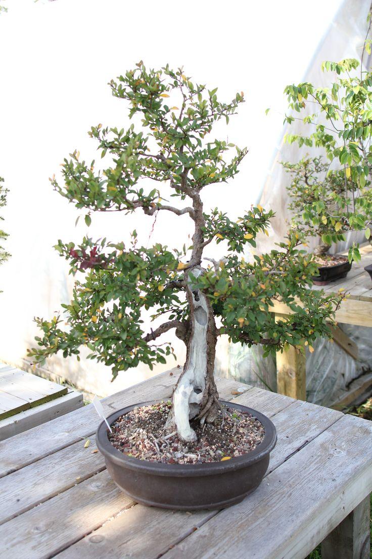 how to make a bonsai garden