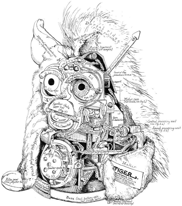 anatomy of a furby lol chartsmaps t anatomy hand
