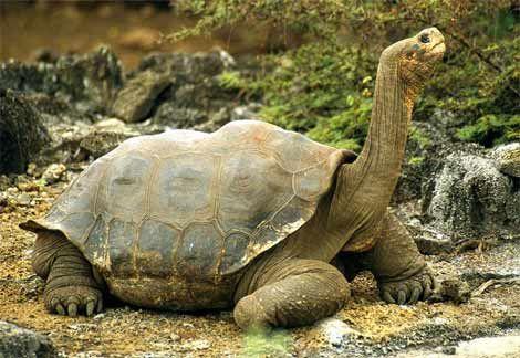 UNESCO World Heritage Site - Galapagos Islands, Ecuador