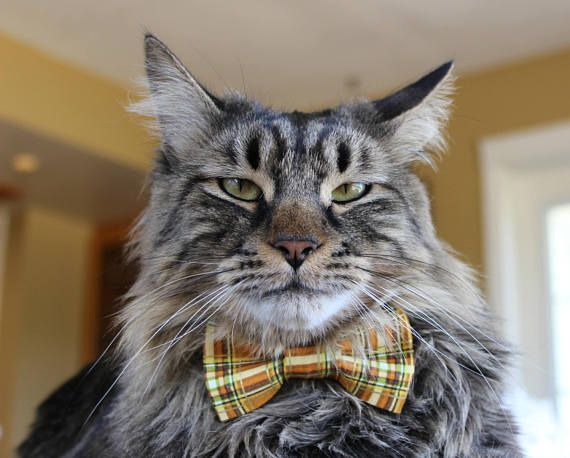 Fall Plaid Bow Tie for Cat Dog Pets Bow Tie Collar