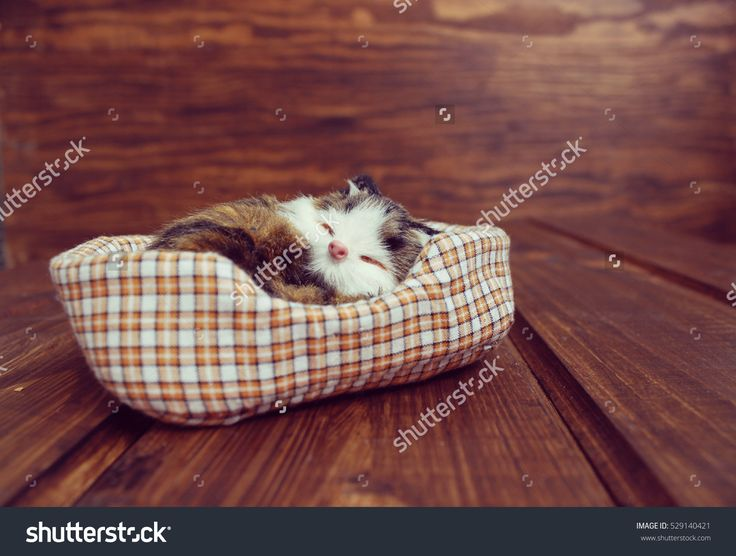 Toy sleeping cat