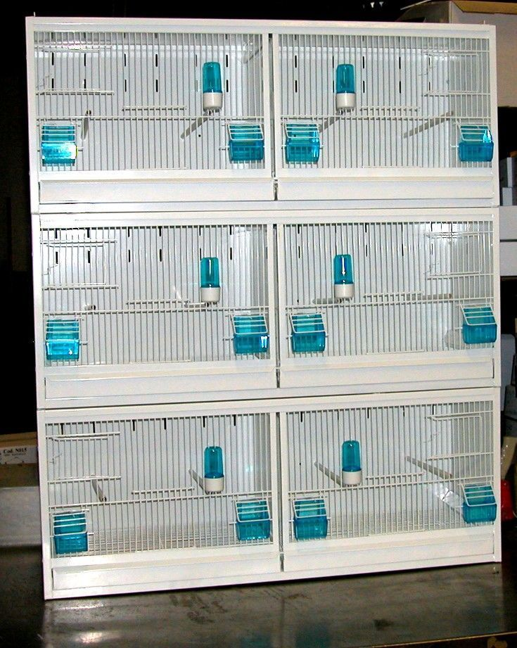 Fisher Bird Breeding Cage Size Dengan Gambar Kandang